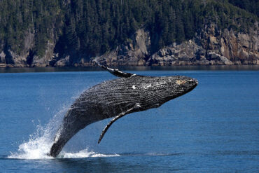 Could Climate Change be Altering the Marine Food Web?