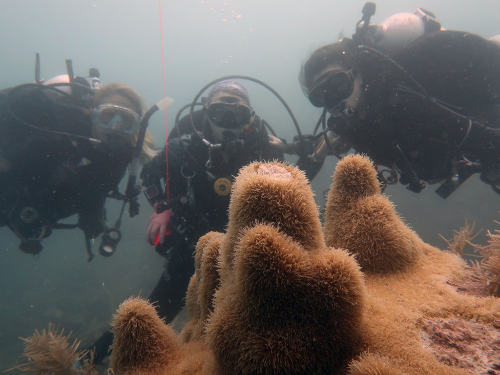 Emergency Expedition Saves Thousands of Diseased Corals in Florida's Dry Tortugas National Park