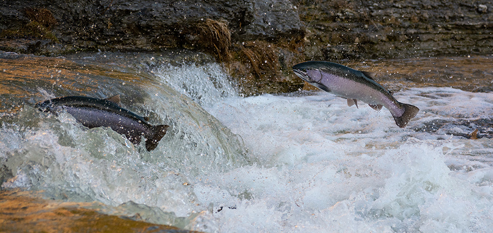 Mountaintop Mining Causes 40% Loss of Aquatic Biodiversity