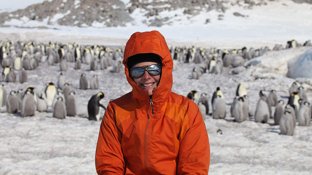 New Study Finds Emperor Penguins Increasingly Threatened by Climate Change